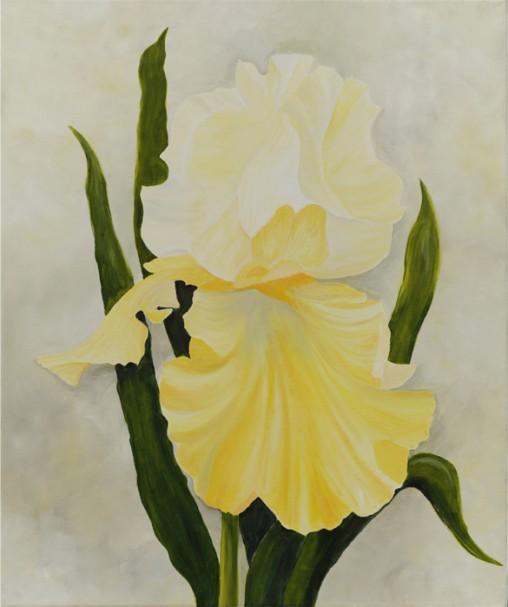 Iris 22