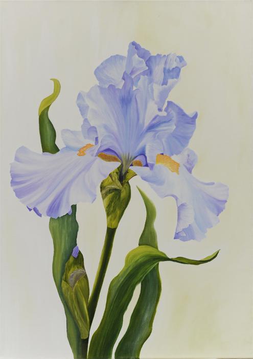 Iris 25