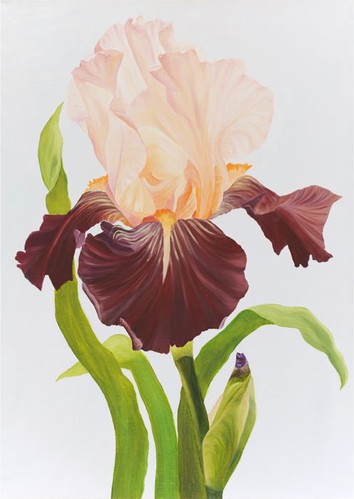 Iris32